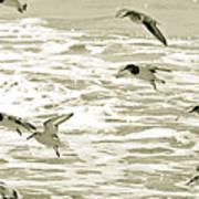 Seagulls Landing Tampa Florida Art Print