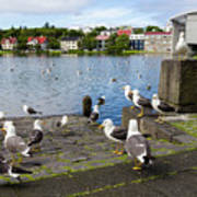 seagulls near a pond in the center of Reykjavik Art Print