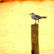 Seagulls Sunset Art Print