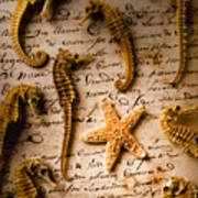 Seahorses And Starfish On Old Letter Print by Garry Gay