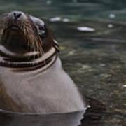 Seal In The Water Art Print