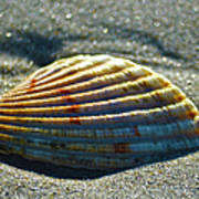Seashell After The Wave Art Print