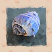 Seashell IIi Grunge With Border Art Print