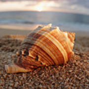 Seashell In The Sand Art Print