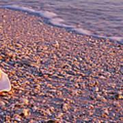 Seashell On The Beach, Lovers Key State Art Print