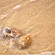 Seashell Turbulence Art Print