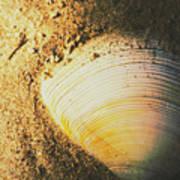 Seashells And Beach Colours Art Print