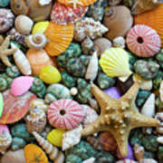 Seashells 3 Art Print