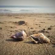 Seashells In The Sand Art Print
