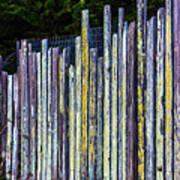 Seashore Fence Art Print