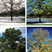 Seasons Of Time Art Print