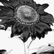 Seattle Sunflower Bw Invert - Stronger Art Print