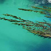 Seaweed Patterns Art Print