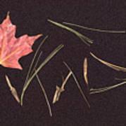 Secret Language Of The Forest Art Print