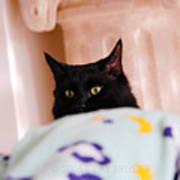 Secret Mission For Catnip Art Print