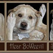 See Boweevil Art Print