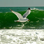See Gull Art Print