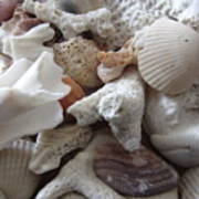 See Sea Shells Fom The Sea Art Print