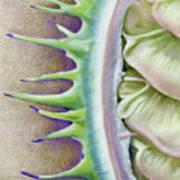 Seed Pod Art Print