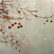 Seeds Of Fall Art Print