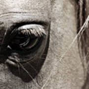 Stillness In The Eye Of A Horse Art Print