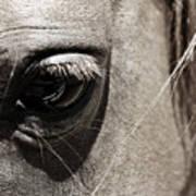 Stillness In The Eye Of A Horse Art Print