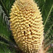 Sago Palm Flower Art Print