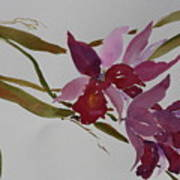Selby Orchids Art Print