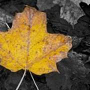 Selective Color Leaf Art Print