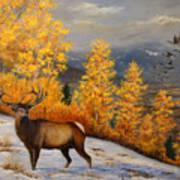 Selkirk Elk Art Print