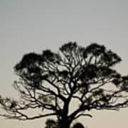 Senset Trees Art Print