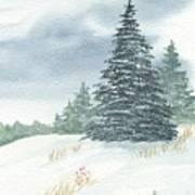 Sentinel Spruce Art Print