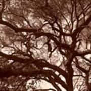Sepia Branch Burst Art Print