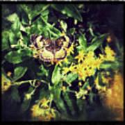 Sepia Butterfly Art Print