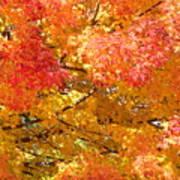 September Leaves Art Print