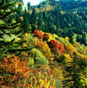 September Mountainside Art Print
