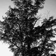September Tree ... Art Print