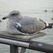 Serene Seagull Art Print