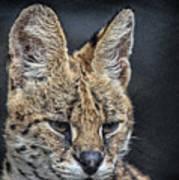 Serval Portrait Art Print