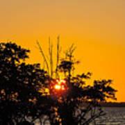 Setting Mangrove Sun Art Print