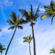 Seven Palms Of Paradise Art Print