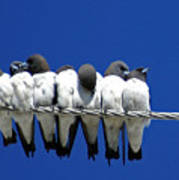 Seven Swallows Sitting Art Print