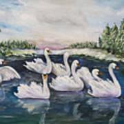 Seven Swans A Swimming Art Print