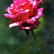Sexy Rexy Rose Art Print