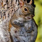 Sexy Squirrel Art Print