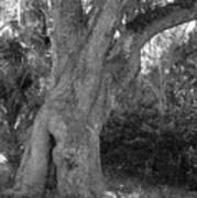Kingsley Plantation Tree Art Print