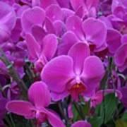 Sf Pink Flowers Art Print