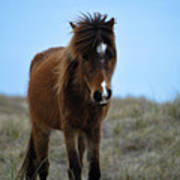 Shackleford Banks Pony Art Print