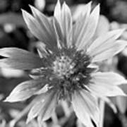 Shades Of Gray Flower By Earl's Photography Art Print