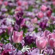 Days Of Wine And Tulips Art Print